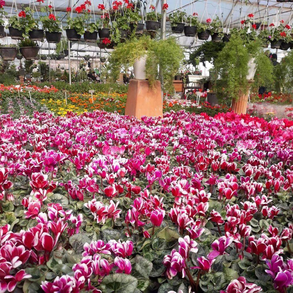 بازار گل تهران - خرید عید در تهران